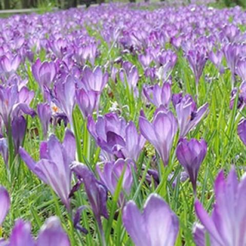 Мікс ландшафтний Bee Veenendaal фото