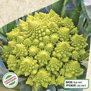 Капуста броколі Романеско фото