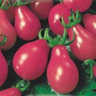 Помідор Груша рожева фото