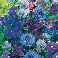 Літня суміш Квітковий сон синій фото