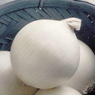 Цибуля Стерлінг F1, білий фото