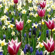 Мікс ландшафтний Palette of Spring фото
