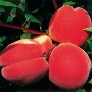 Персик Інка фото