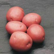 Картопля Courage фото