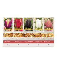Шоубокс Тюльпани Пізні фото