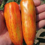 Помідор Orange Ray фото