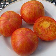 Помідор Зебра оранжева фото
