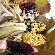 Кукурудза Baby Corn Mix фото