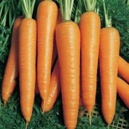 Морква Віта Лонга фото