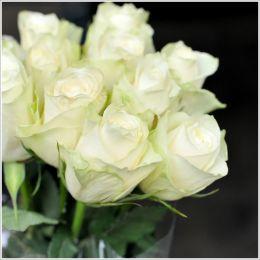 Троянда Athena фото