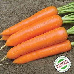 Морква Монанта фото