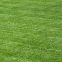 Газон спортивний EG 420 фото