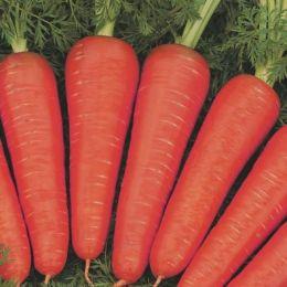 Морква Канада фото