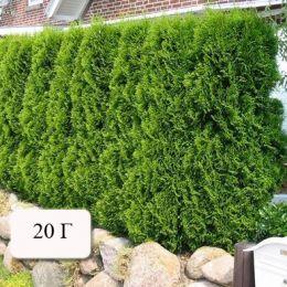 Брексіл Комбі (для туй та хвойних рослин) фото
