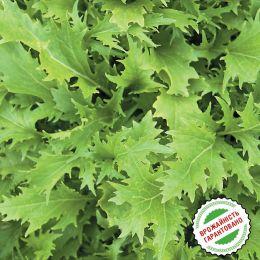 Гірчиця японська Зелена мізуна фото