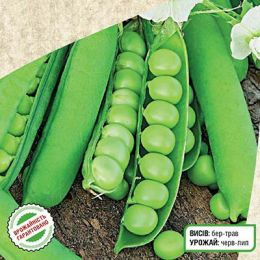 Горох овочевий Авола фото