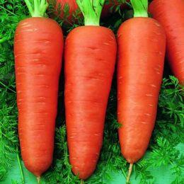 Морква Долянка фото