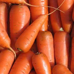 Морква Оленка фото