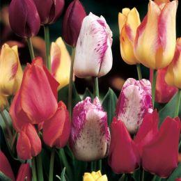 Тюльпан Multiflowering Mix фото