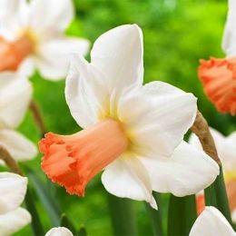 Нарцис Skype фото