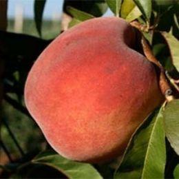 Персик Центрі фото