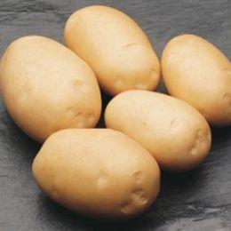 Картопля Derby фото
