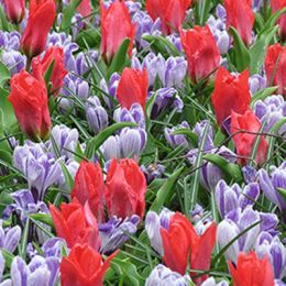 Мікс ландшафтний Promise of Spring фото