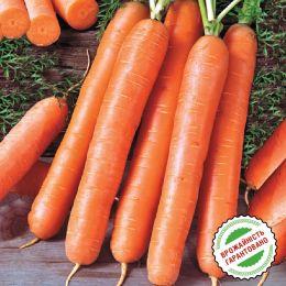 Морковь Ройал Форто фото
