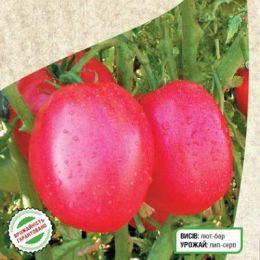 Помідор Рожевий Фламінго фото