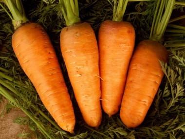 Морковь Абако фото цена