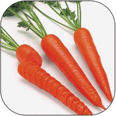 Морковь Каротан смотреть