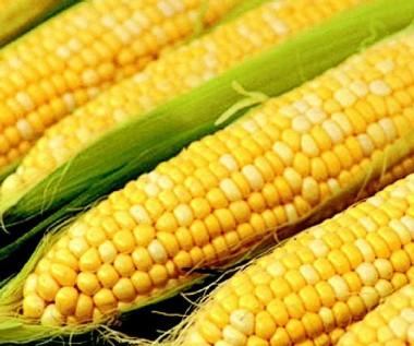 Кукуруза Сахарная Джубили F1 почтой