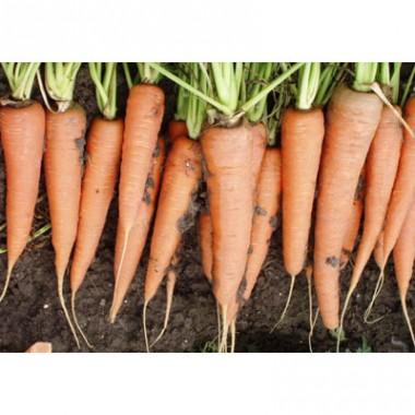 Морковь Скарла интернет-магазин