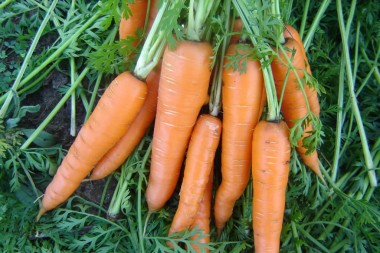 Морковь Вита Лонга в киеве