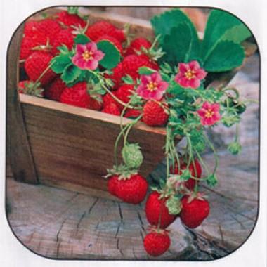 Клубника Розовое чудо фото