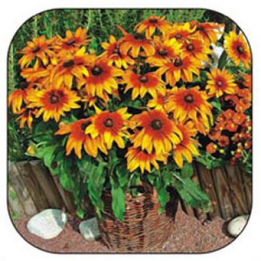Семена многолетних цветов купить