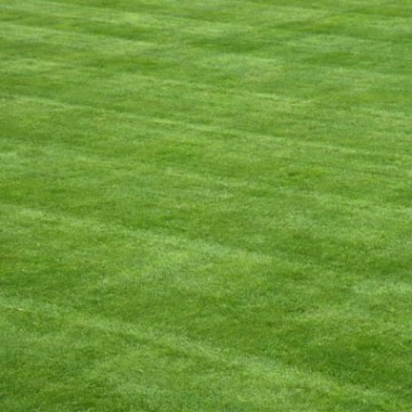Газон спортивный Либеро фото