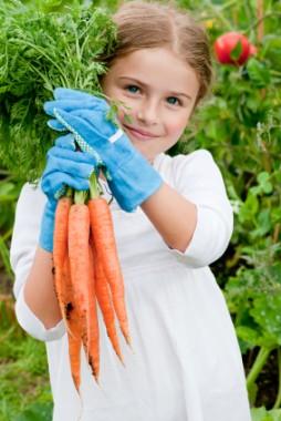 Морковь Колтан F1 в киеве