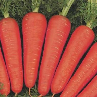 Морковь Канада фото цена