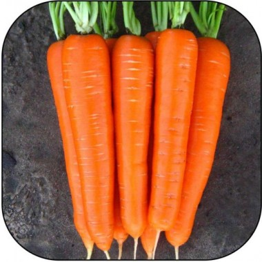 Морковь Лагуна F1 в киеве