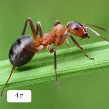 Гель против муравьев почтой