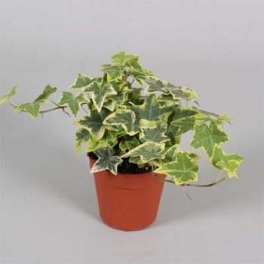 Комнатные растения купить