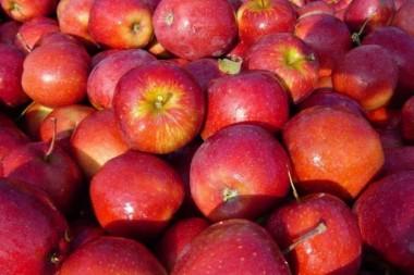 Яблоня Джонапринц в киеве