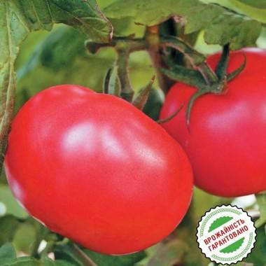 Семена помидор и томатов купить