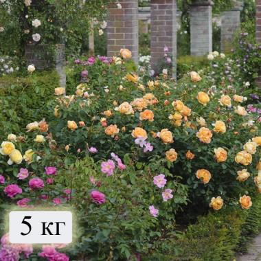 Минеральные удобрения Для роз (на 200 м. кв) фото цена