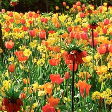 Микс ландшафтный Flower Art смотреть