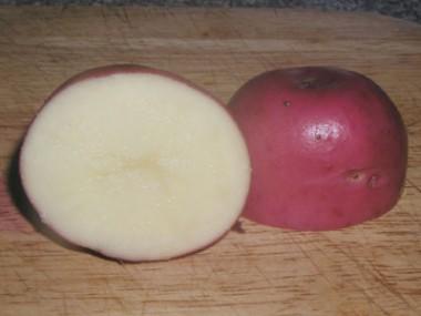 Картофель семена и клубни купить
