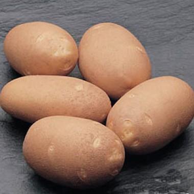 Картофель Innovator почтой