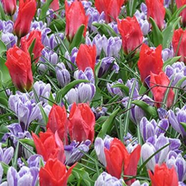 Микс ландшафтный Promise of Spring почтой