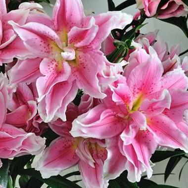 Ориентальные лилии  купить